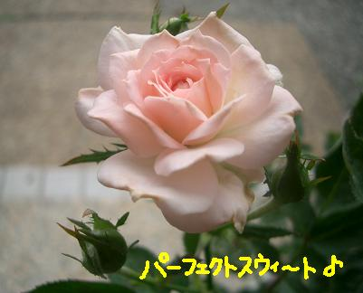 Cimg5640_p