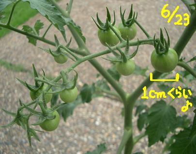 Cimg5650_tomato1